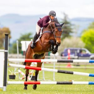 Horse for sale: Fine Tune NZPH Lovely well bred 6YO Mare