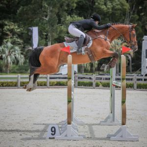 Horse for sale: Heartline
