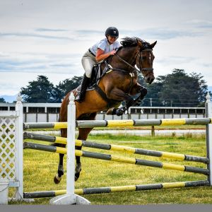 Horse for sale: Ultimate Alrounder