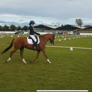 Horse for sale: Stunning, Blingy TB Gelding