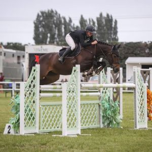 SUPER COMPETITIVE PRO AM/JUNIOR RIDER HORSE