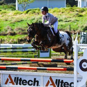 Horse for sale: Bling Du Rouet