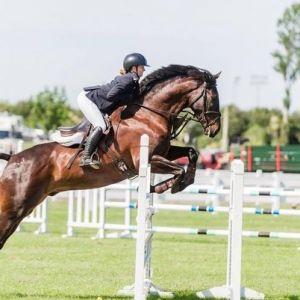 Horse for sale: Handsome quality jumper