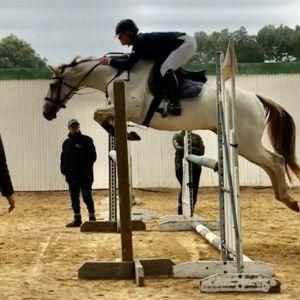 Horse for sale: Potential Jnr/Am or Hunter!!