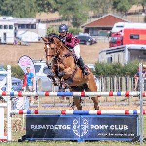 Horse for sale: Sir JK