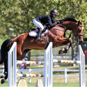 Horse for sale: Fiesta NZPH