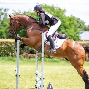 Horse for sale: Gorgeous Amateur Rider with temperament and scope!!!