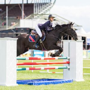 Hunter/Show Jumper