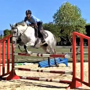 Horse for sale: Amateur/Young rider