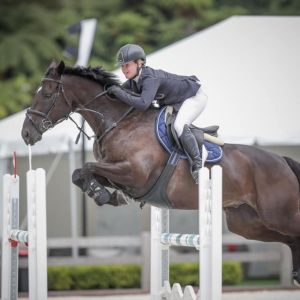 Superstar Young Rider/1.40m mount