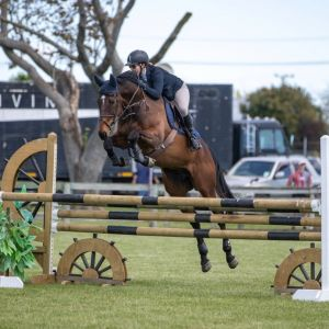 Competitive Amateur  Showjumper
