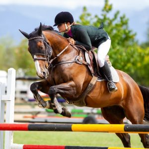 Horse for sale: Beautiful safe horse