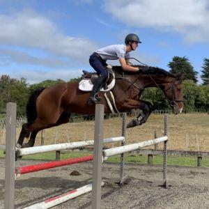 Quality Sporthorse