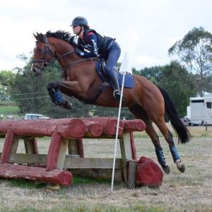 Horse for sale: Wonderful all rounder/ first hack.