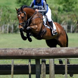 Safe/Easy Eventing Schoolmaster