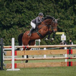 Horse for sale: Coromiko Gold