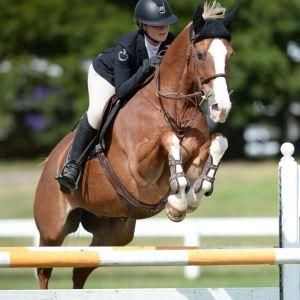 Horse for sale: NZ FIREBALL-PERFECT SCHOOL MASTER