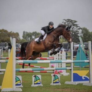 Horse for sale: KING COBRA   -THE PERFECT GENTLEMAN