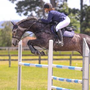 Horse for sale: Talented Warmblood Mare