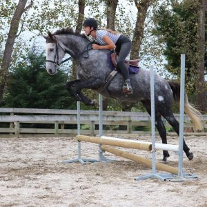 Horse for sale: Talented Prospect, Warmblood x