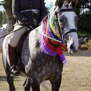 Horse for sale: The Ultimate Allrounder