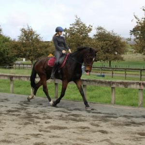 Horse for sale: Potential Allrounder