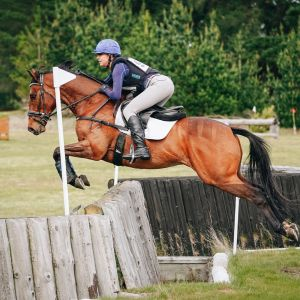 Horse for sale: Stunning Young Allrounder
