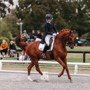 Horse for sale: Exceptional Dressage Gelding