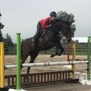 Horse for sale: Quality Showjumper or Eventer