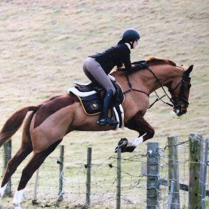 Horse for sale: Hunter/Whip Horse/Huntsman Horse