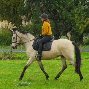 Horse for sale: Stunning Allrounder
