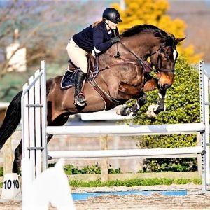 Horse for sale: Versatile Hunter - Make an offer