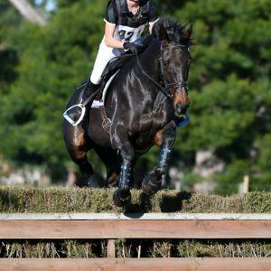 Horse for sale: Lovely Gelding