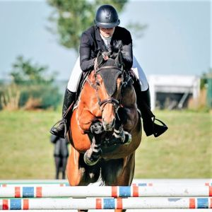 Horse for sale: TMS Vincenzo