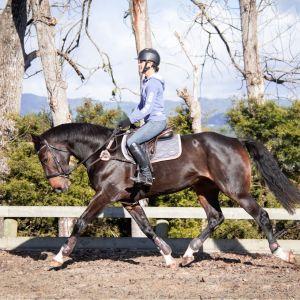 Horse for sale: IMPECCABLE PACES, SIZE & TEMPERAMENT