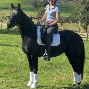 Horse for sale: SF Felicity