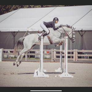Horse for sale: Honest/kind SJ mare.