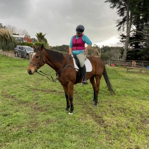 Horse for sale: TB Mare by Howbaddoyouwantit