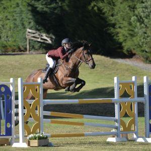 Horse for sale: Zabambi