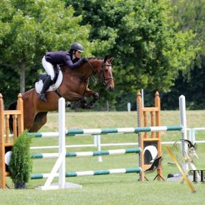 Horse for sale: VIVE OL XTREME - In Foal to Numero Uno Xtreme