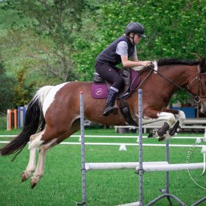 Horse for sale: Safe and Talented Mare