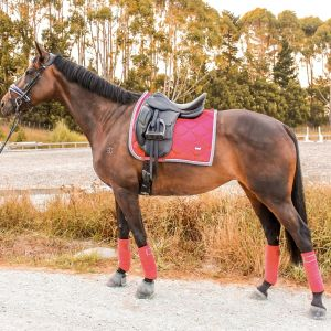 Horse for sale: Young Well Educated All Rounder