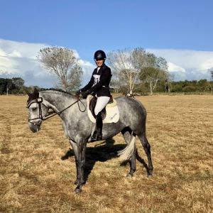 Horse for sale: Beautiful Mare - Safe All Rounder