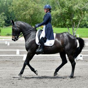 Horse for sale: ADVANCED DRESSAGE SCHOOLMASTER