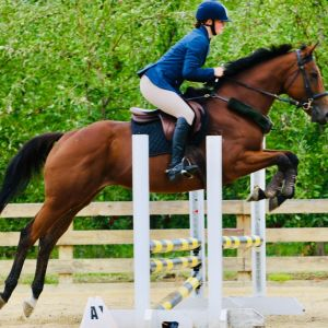 Horse for sale: Sweet Bay Mare