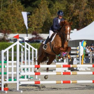 Horse for sale: !Quality and athletic 5 year old!
