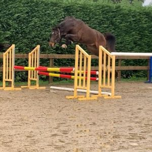 Horse for sale: Exceptionally Well Bred Young Horse