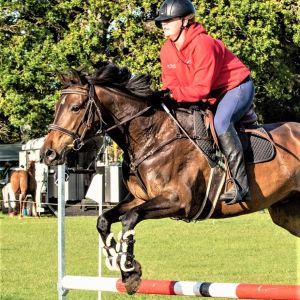 Horse for sale: Stunning All Rounder - Versatile Fun Hack