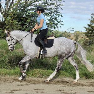 Horse for sale: Locomotive Breath