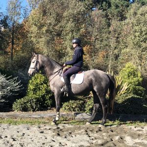 Pandora ASH (Askin Sport Horses)